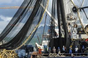 Menentang IUU Fishing di Perairan Kaltim yang Mengancam Masa Depan